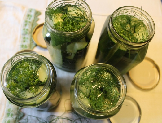 Add vinegar brine, then more dill on top.