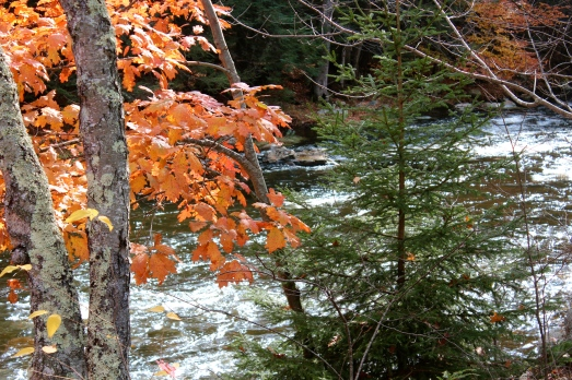Along the riverbank, orange leaves and evergreens mixed.