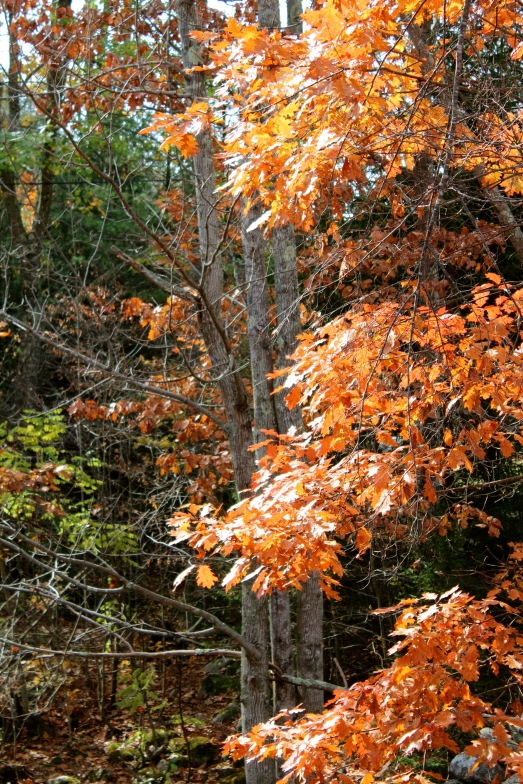 More of those orange leaves, so bright against the greens.