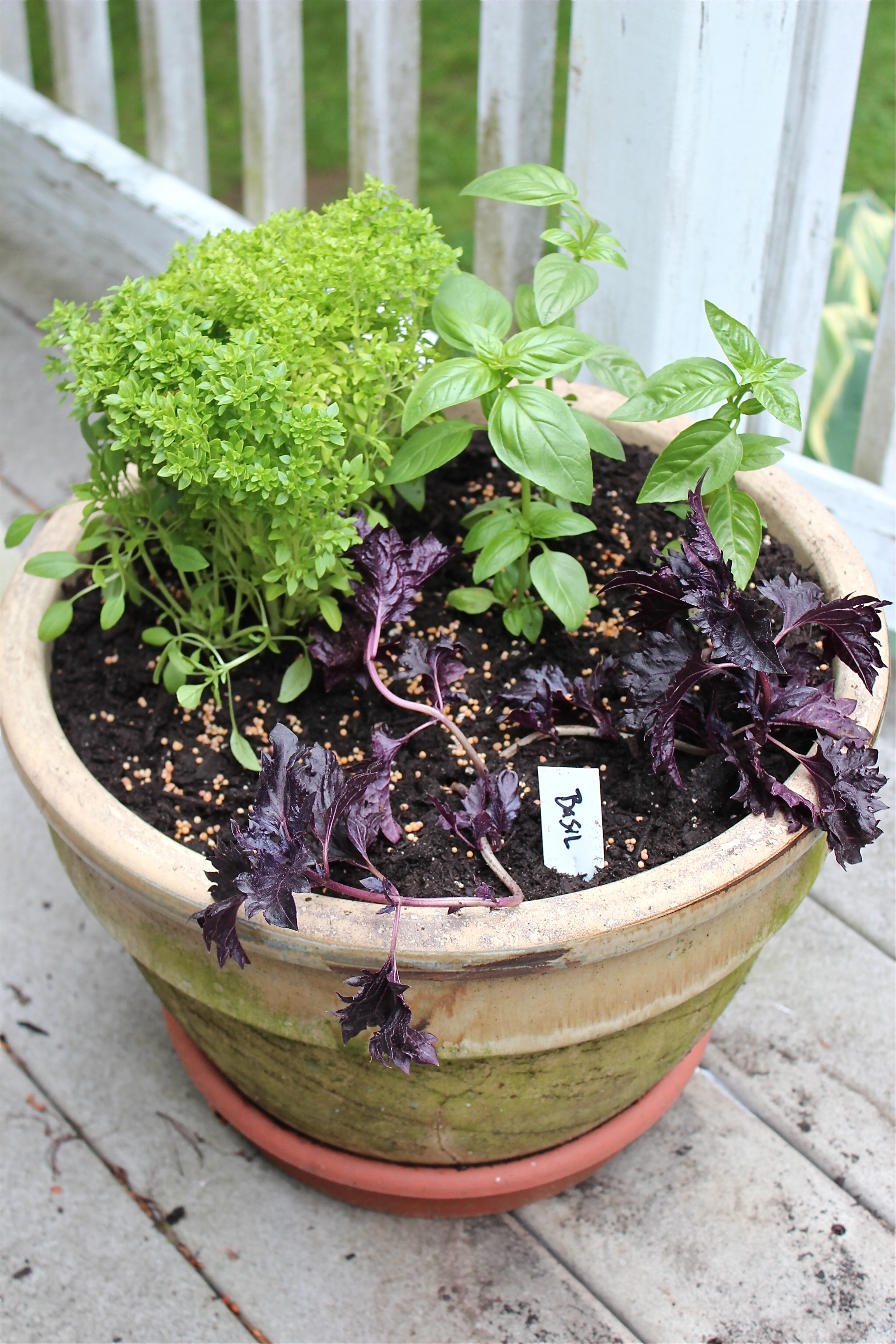 Potted Basil Garden